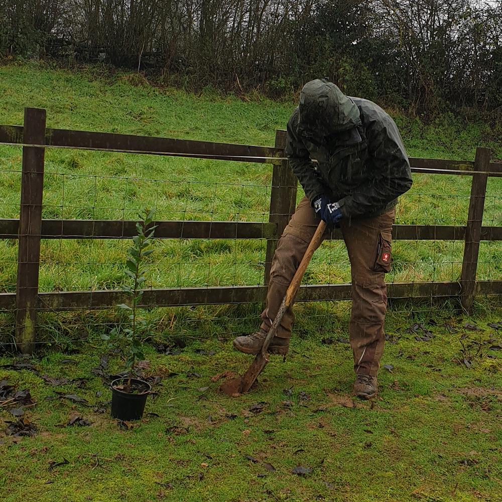 A man planting a tree