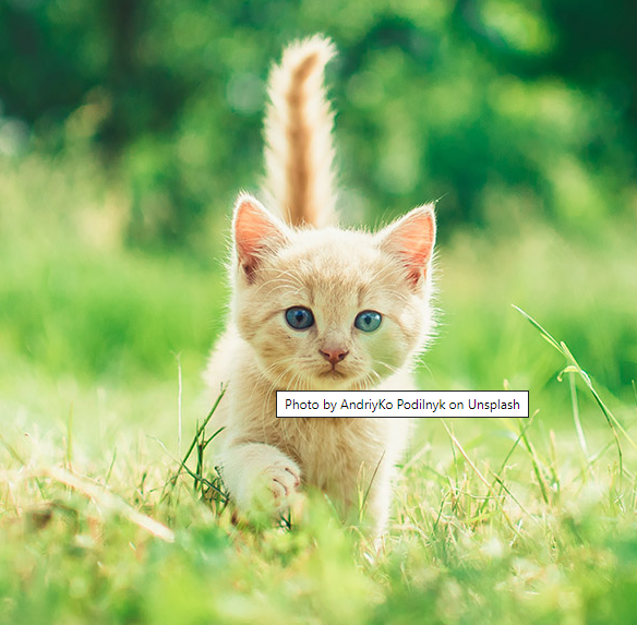 "Screenshot of a photo of a kitten with the title attribute saying ""Photo by AdriyKo Podilnyk on Unsplash"" showing as a tooltip."