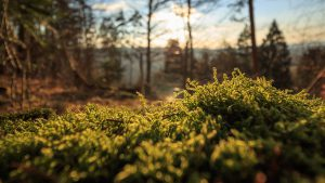 Moss and grass in a forest