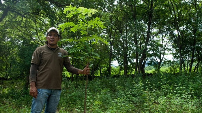 A farmer stands holding a Caealpina velutina tree as part of the CommuniTree project in Nicaragua.
