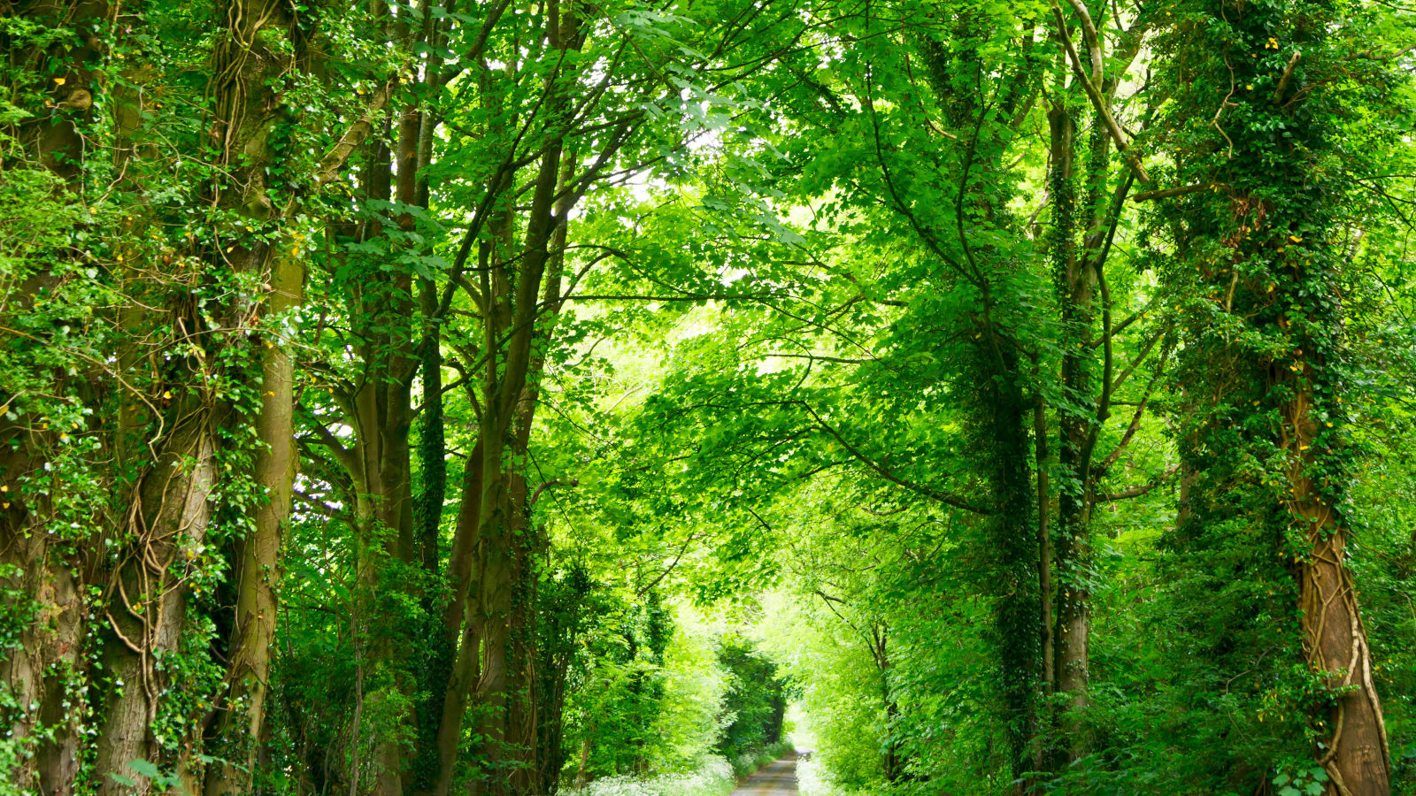 Green trees in a woodland