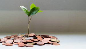 A tree seedling growing out of a pile of coins