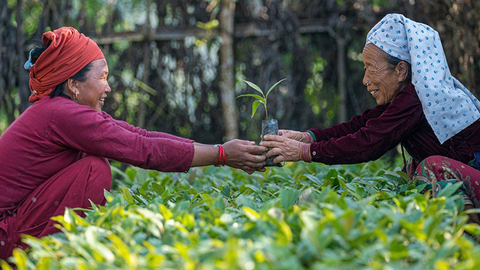 Two women pass a sapling between each other over a large collection of other saplings.