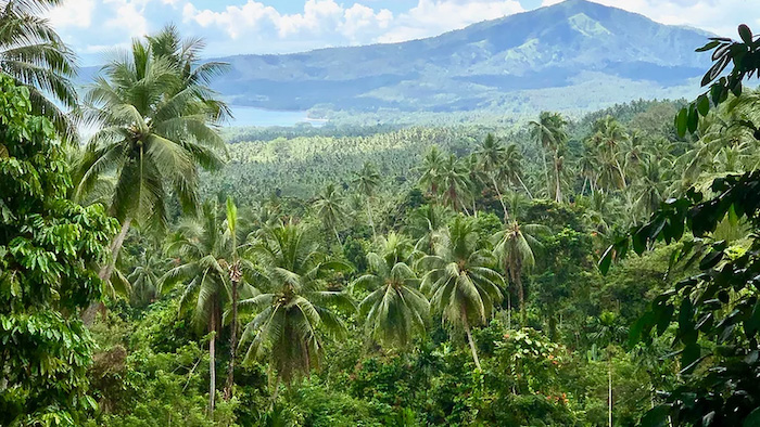 A view of the Hans Meyer mountain range in Papua New Guinea, with a lush forest filled with palm trees.
