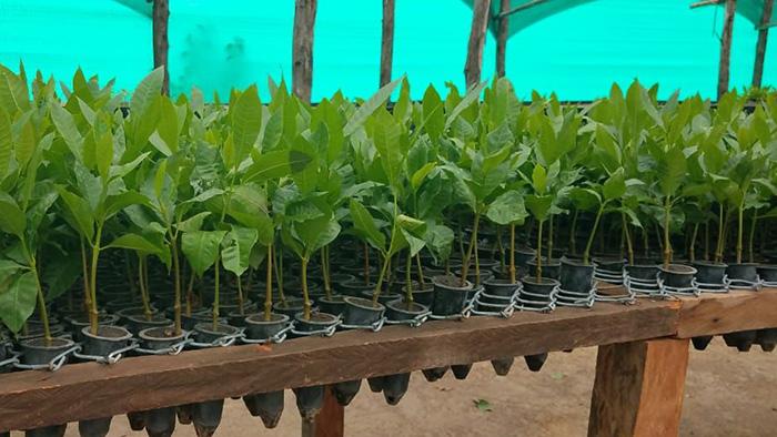 Seedlings growing in a greenhouse.