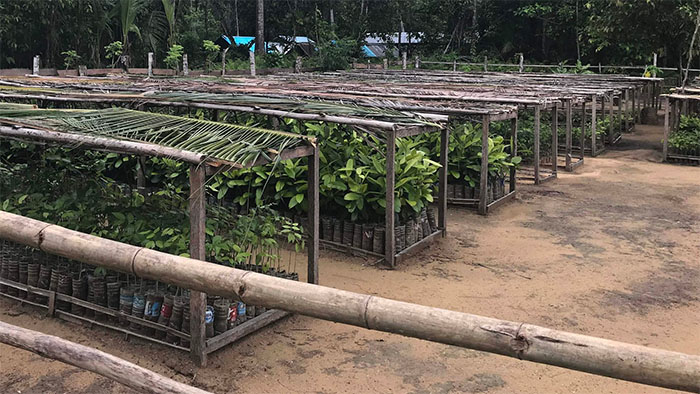 Photo of the nursery in Indonesia, with trees growing under bamboo roofs.